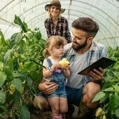 the-father-in-a-greenhouse-showing-his-daughter-how-pepper-grows-on-a-picture-id1163693619.jpg
